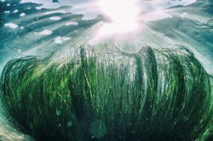 Repêchage: i segreti delle alghe