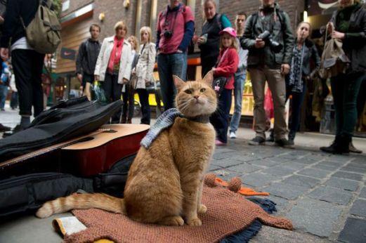 street-cat-bob