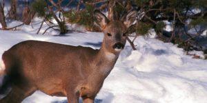 alla-malga-gampen-di-funes-escursioni-invernali-funes-valle-isarco-alto-adige