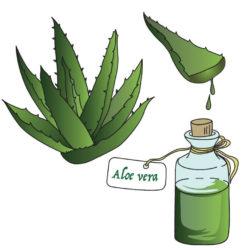 Martano- Aloe Vera