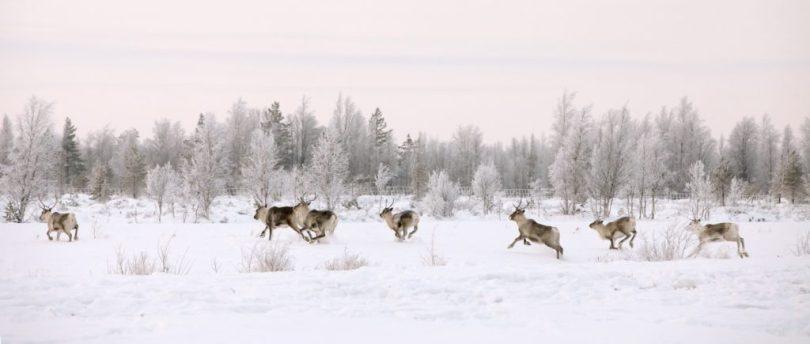 Finlandia- Sinfonia-estremi -Lapponia