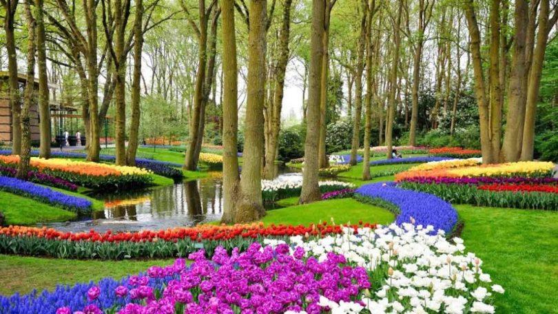 tulipani-Keukenhof-Olanda-