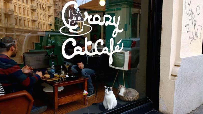 Milano per un mese è la città dei gatti