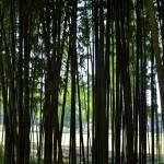 Parco Segantini: l'oasi naturale di Milano