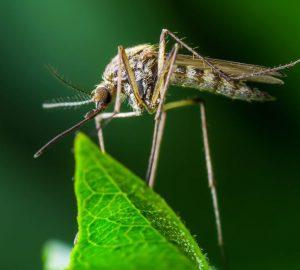 Le zanzare, incubo dell'estate, come proteggersi