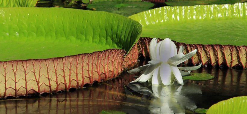 mauritius-in-fiore-tra-profumi-e-colori