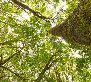 foreste-preistoriche-delle-canarie