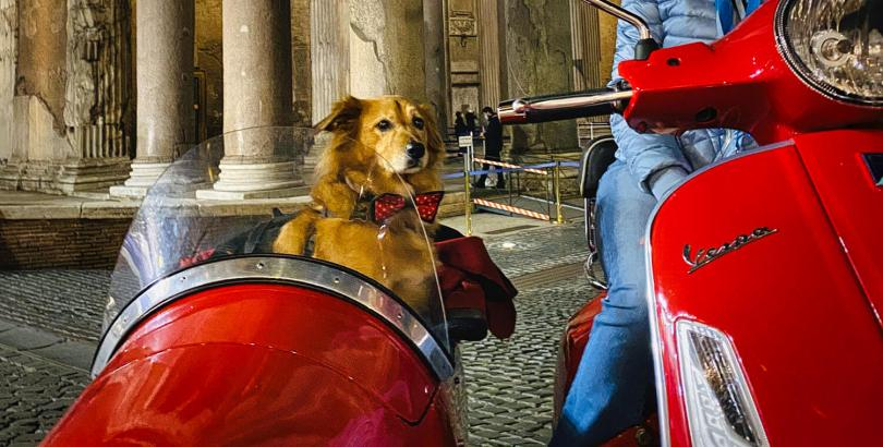 tripfordog-cinque-incredibili-esperienze-da-fare-con-il-vostro-cane