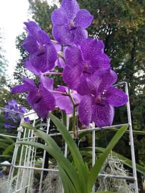 orticola-a-milano-un-appuntamento-dedicato-alle-meraviglie-della-natura