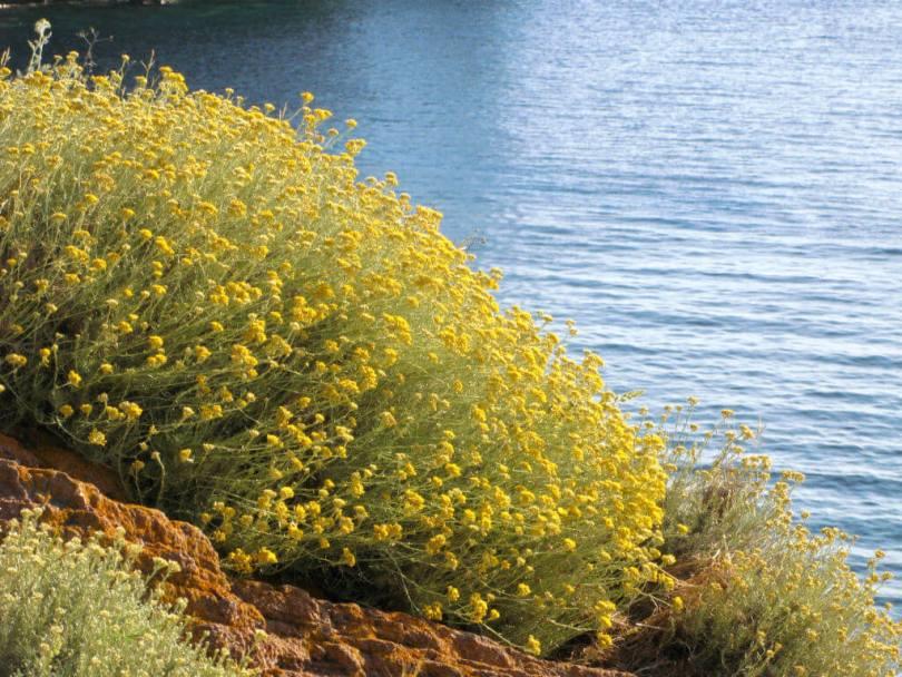 il-profumo-del-mediterraneo-un-viaggio-tra-gli-aromi-delle-nostre-coste