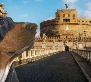 al-museo-con-il-cane-gli-amici-pelosi-avranno-un-servizio-di-dog-sitter