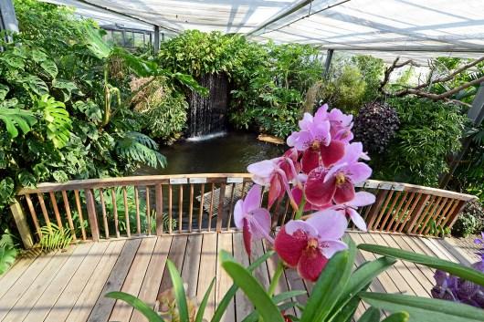 Schmetterlingshaus, Insel Mainau 2015