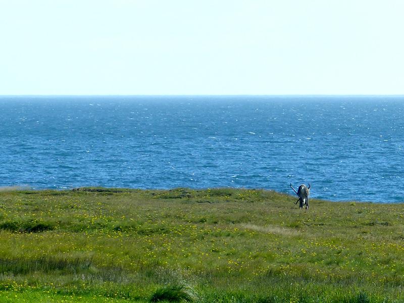 Voyage en Islande, rennes