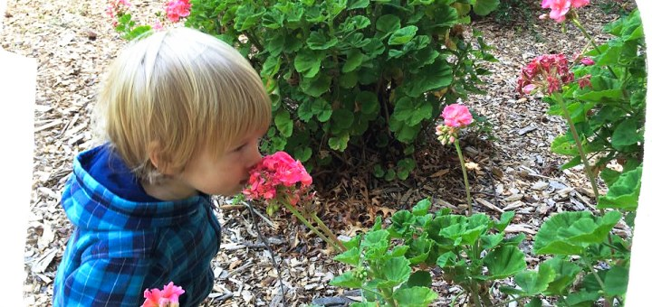Josh smelling flowers