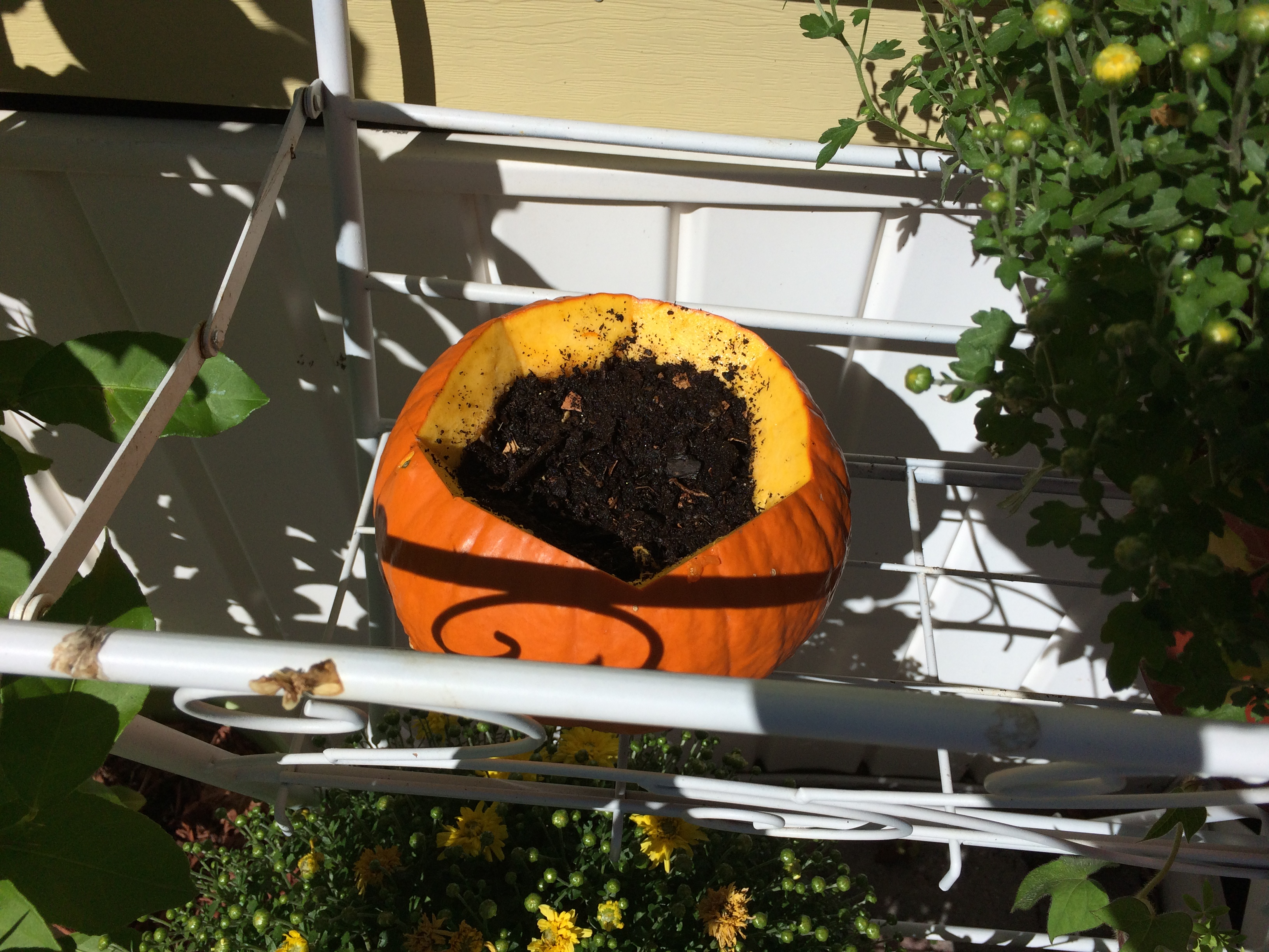 pumpkin holding soil as planter outside