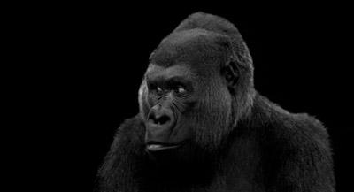 TORONTO 38 - Visitors: Godfrey Reggio + Philip Glass. Il trailer