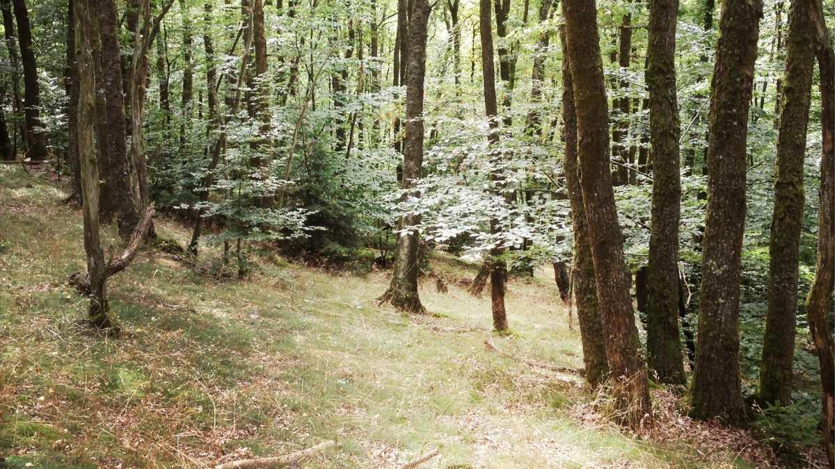 Les Crêtes de Frahan et le parcours des échelles : Topo Rando Trail