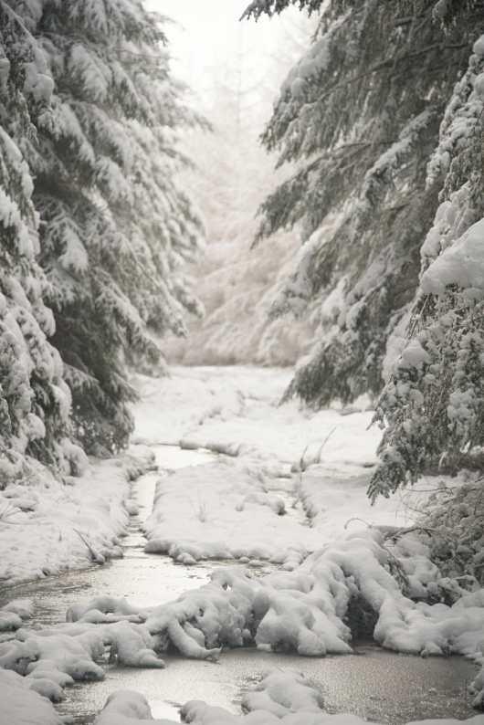 Trail et Rando en Haute Ardenne