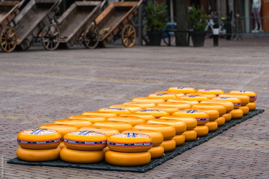Alkmaarse kaasmarkt