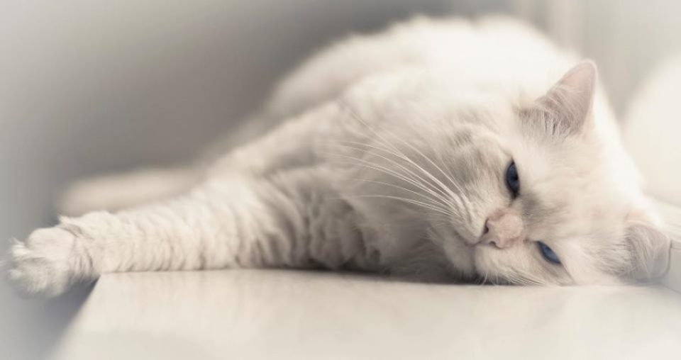 Maakt jouw kat jou 's ochtends vroeg wakker?