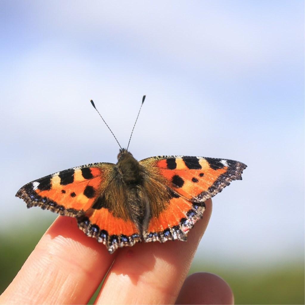 Bir Kelebek Gibi
