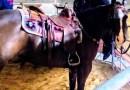 Speroni, selle, cavalli, polli allo spiedo e molto altro a Fiera Roma