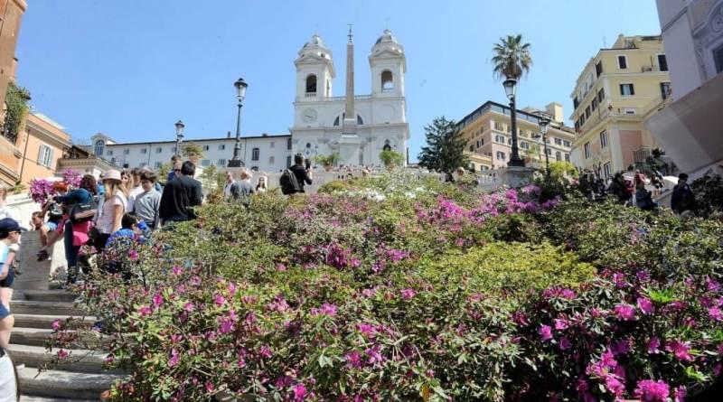 """Sono raddoppiati quest'anno gli esemplari delle pregiate azalee sulla famosa scalinata di Trinità dei Monti. Raggi """"spettacolo straordinario""""."""