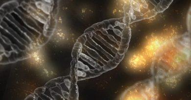Epigenetica e ambiente, Nutrizione e nutraceutica. Dalla Medicina alla fisica O dalla fisica alla medicina?Domenica 9 settembre, Bologna.