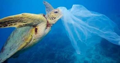 Progetto sperimentale, un anno con la campagna Plastic Free Challenge, si comincia con 15 istituti per poi estendere a tutte le scuole dell'infanzia.