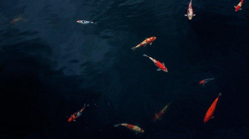 Alcune domande che i Ketchup Katz si pongono e alle quali cercano una risposta su pesci e acquariofilia.