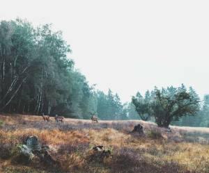 Lokale SEO ydelser i Danmark!