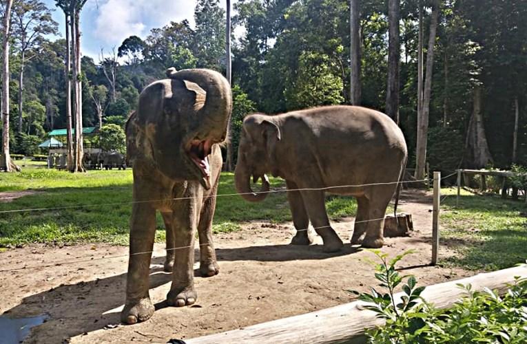 Merayau Di Pahang, Dari Gajah Ke Terowong Bijih Timah