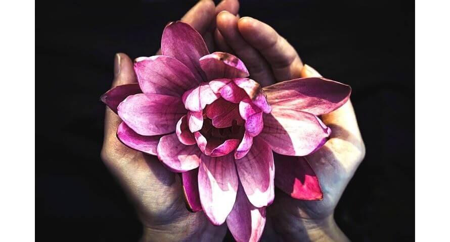 symbole de la fleur de lotus