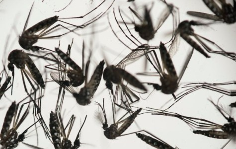 Zika Virus Spreads to Miami
