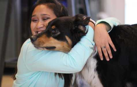 Animal Therapy: How Common Animals Are Making Medical History