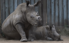 The Impact of Rhino Extinction