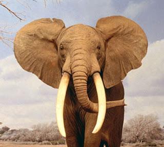 De empresa elefante a empresa gacela