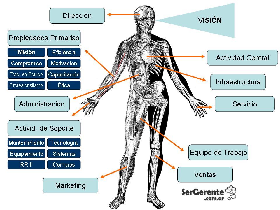 Anatomía de una Empresa. ¿Cómo diagnosticar enfermedades? | Ser ...