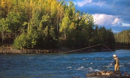 ¿Porqué el #Management es tan parecido a la #PescaDeportiva?