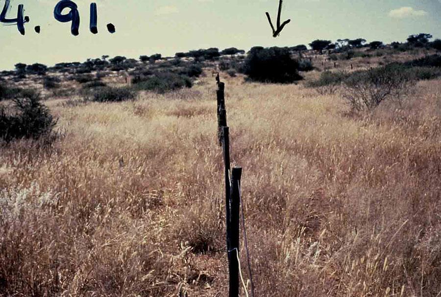 Namibia, 1991 después de practicar manejo holístico
