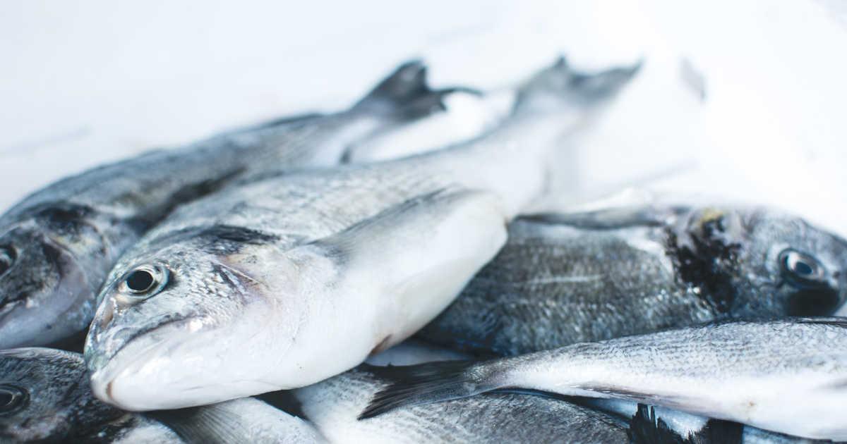 Un pesce sul banco della pescheria