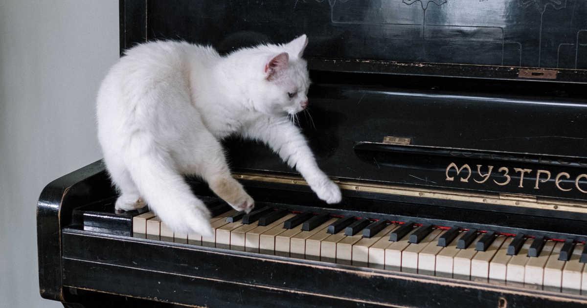 Gatto che suona il pianoforte