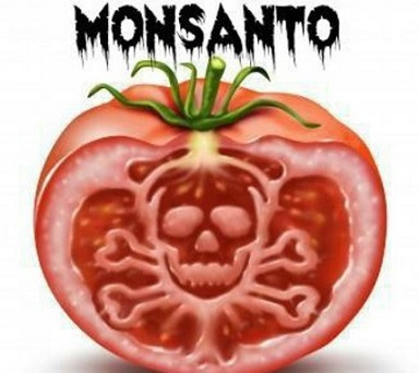 Estate amara per Monsanto