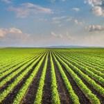 La Francia con i piccoli agricoltori