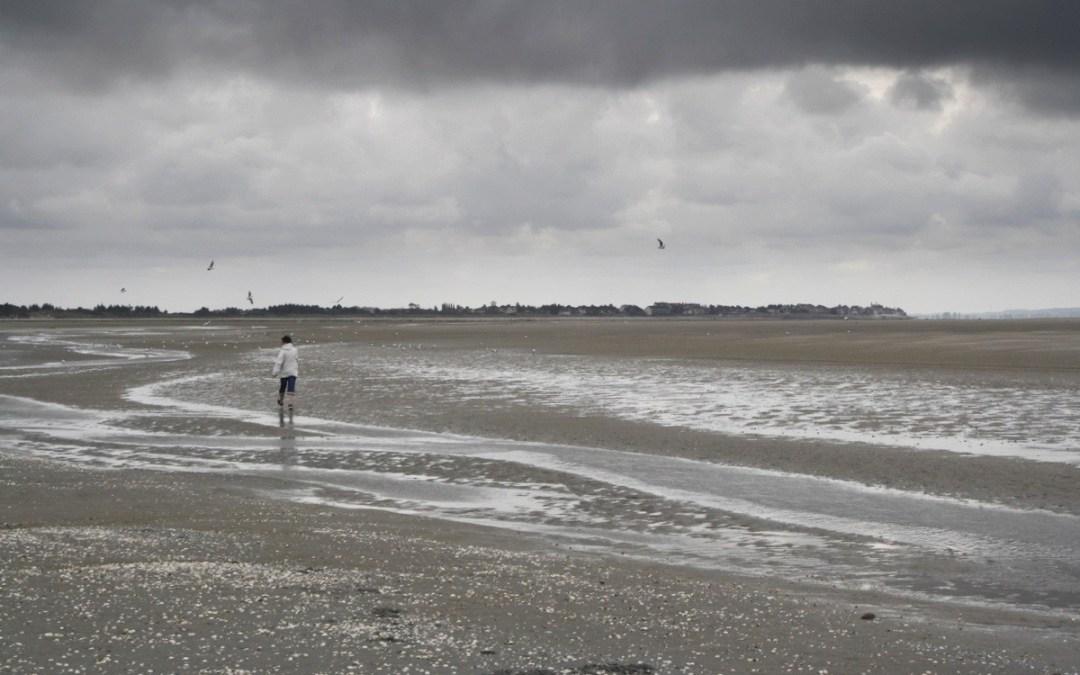 Une promenade à pied en Baie de Somme avec un guide nature pour observer les phoques