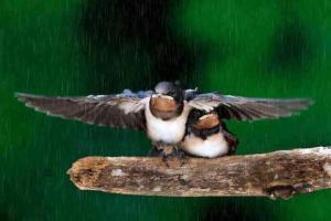 Merhamet gösterip affetmek