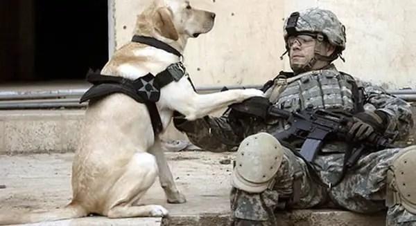 animais usados em guerras