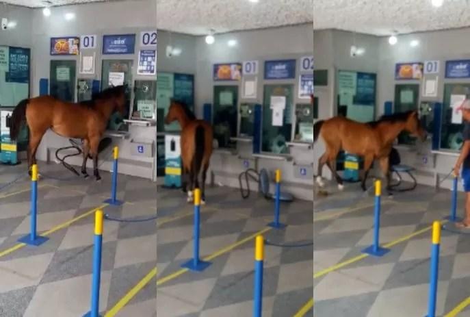 Cavalo invade casa lotérica no interior da Paraíba  e assusta funcionários e clientes