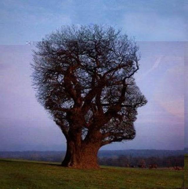 Pohon Bentuk Wajah