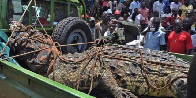 Buaya Uganda